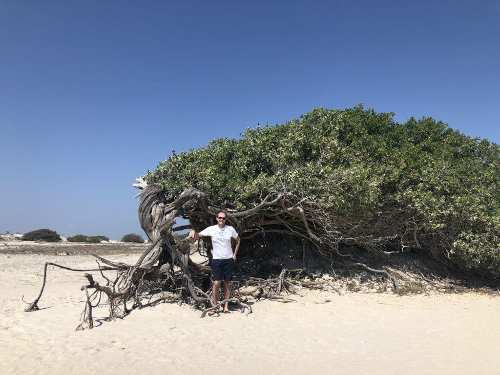 árvore da preguiça deitada
